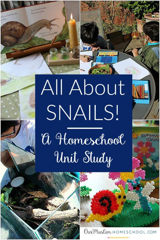 Snails unit study homeschool