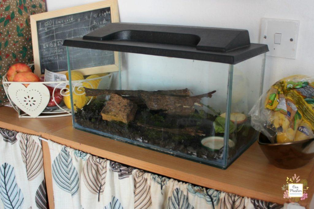 snail habitat for unit study