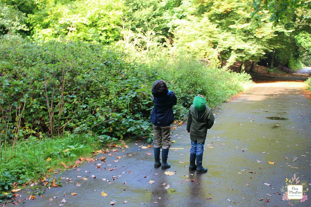 nature walk homeschool