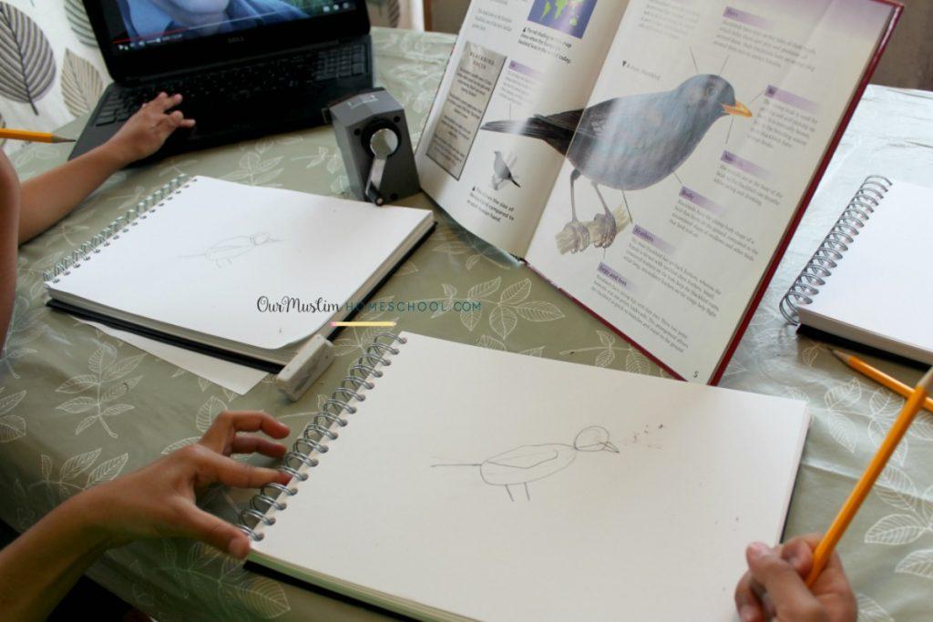 nature journal watercolour blackbird