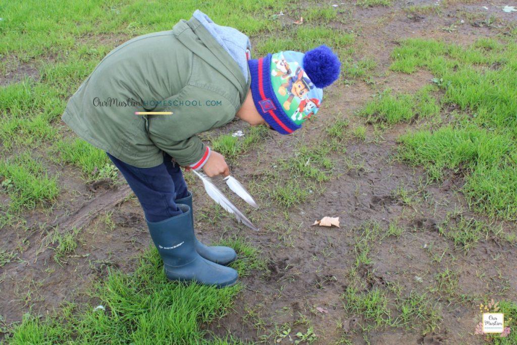 Bear footprints nature study